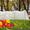 Парник 6 метров,  многократного использования #1063993