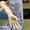 Силикон для снятия слепков с человека - Изображение #1, Объявление #1137576