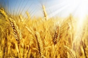 Продам в Одессе зерно комплекс участок 3 га с Ж/Д, есть причал. - Изображение #1, Объявление #1677602
