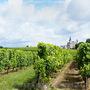 Повышение урожайности виноградников!
