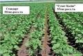 Гумат калия биостимулятор роста растений