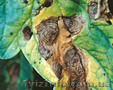 Гербициды, Инсектициды, Фунгициды, Протравители.Средства защиты растений.С/г техник