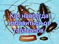 Научу как навсегда избавиться от тараканов. Открою секрет почти даром